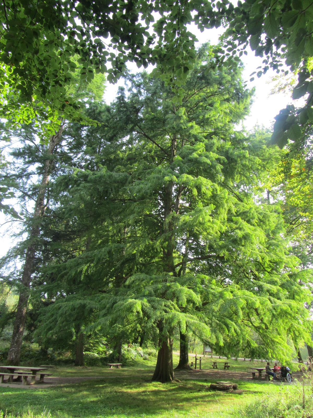 choisir son arbre persistant gamm vert