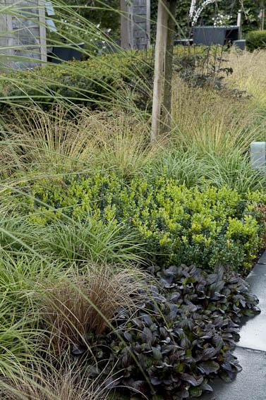 plantes couvre sol cotoneaster sedum gamm vert