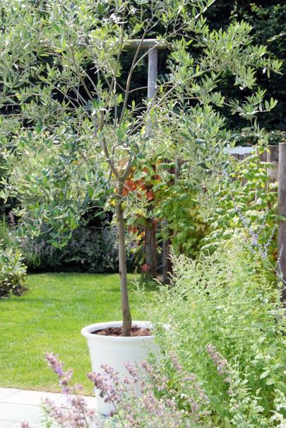7 petits arbres a planter en bac gamm