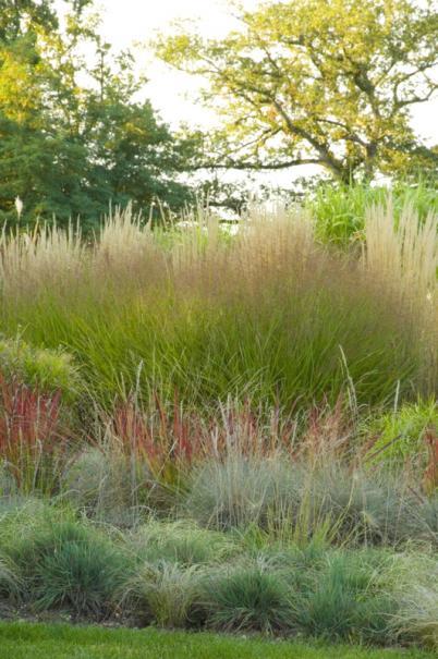 planter des graminees ou herbes