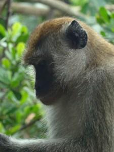 8 zoo Singapour - DSC01839