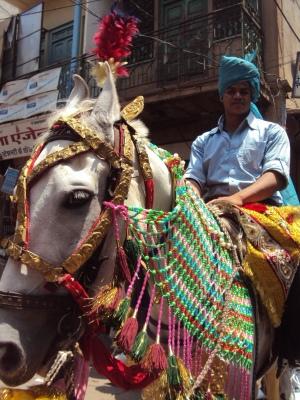 Le cheval du marié!