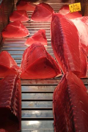 Oh! Le beau thon rouge!