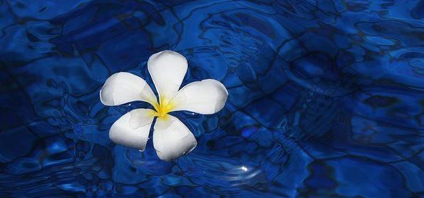flower-1203563_640