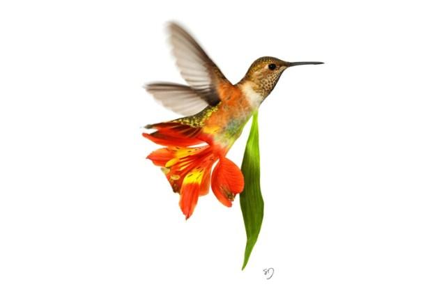 Humming Bird & Flower