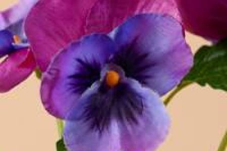 Best wild flowers silk flowers wholesale miami wild flowers silk flowers wholesale miami these flowers are very beautiful here we provide a collections of various pictures of beautiful flowers charming mightylinksfo