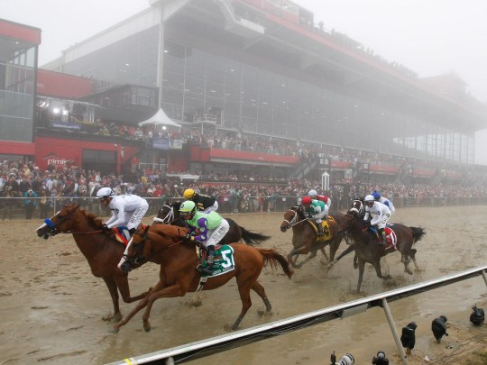 The Preakness field makes the first pass by the grandstand