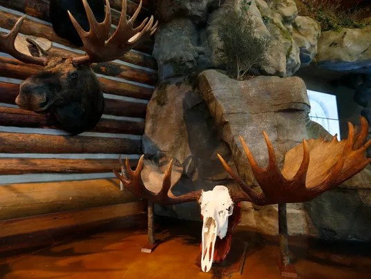 Largest Moose Ever Recorded