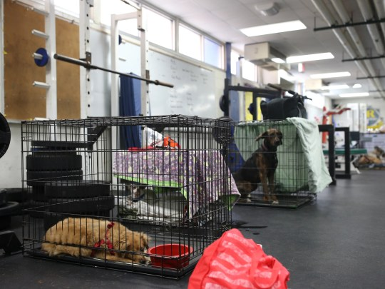 Pets brought to Red Cross emergency shelter at