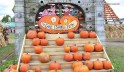 The best pumpkin patches in America