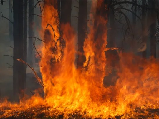 A prescribed burn was carried out on A1 Mountain near