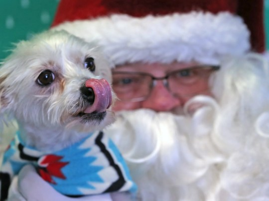 Minnie poses for photos with Santa during Pet Pictures