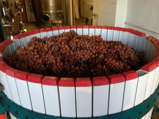 ice wine grapes