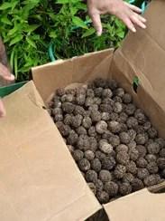 BUR 0907 Vermont's Nuts 12.JPG