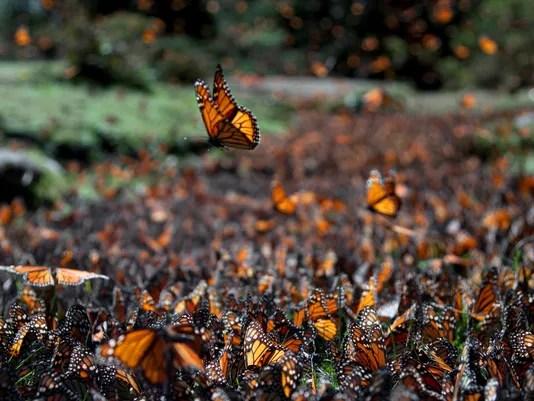 A Billion Beautiful Butterflies