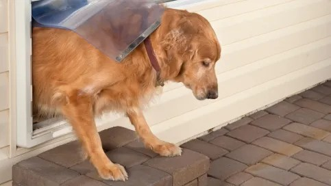 Doggy doors are convenient for your pet, but other wildlife is known to watch and learn.