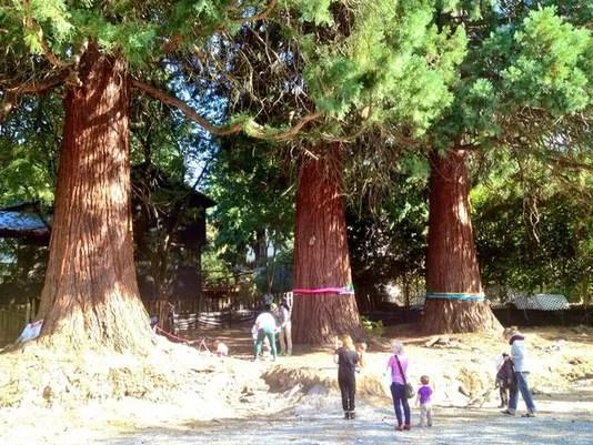 635782014855545613-giant-trees