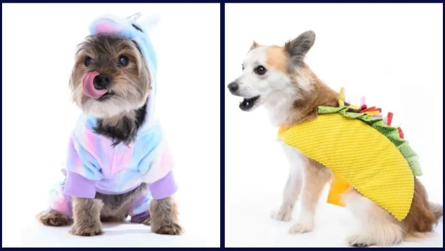Our dogs tried on 13 popular Halloween costumes—here's what happened