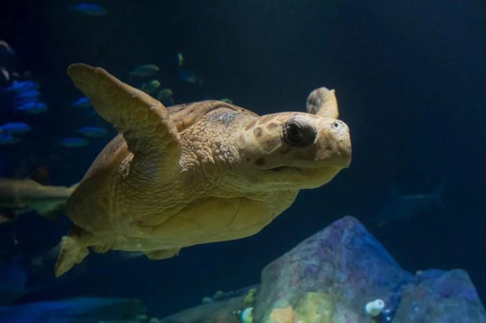The nominees for Best Aquarium are helping children engage with sea life and conservation projects