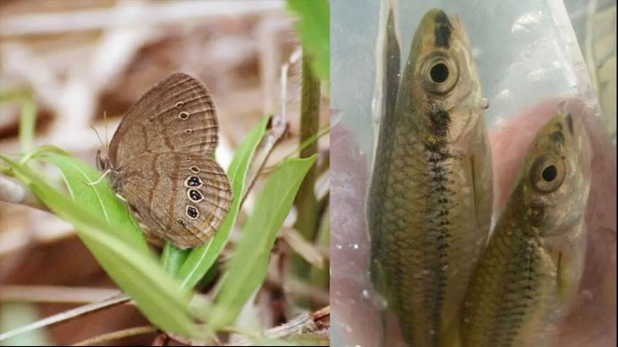 33. North Carolina     • Selected endangered species:  Saint Francis' Satyr Butterfly (neonympha mitchellii francisci), Cape Fear Shiner (notropis mekistocholas)