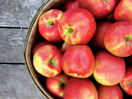 Honeycrisp Apple 13