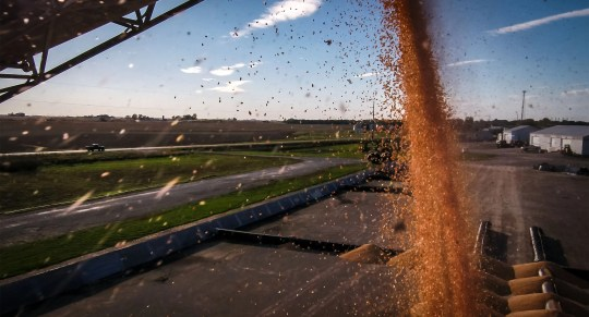 Corn harvest continues near the Heartland Co-op near Prairie City, Iowa, Tuesday, Oct. 16, 2018. Seventeen percent of Iowa's corn for grain crop has been harvested according to the latest USDA report.