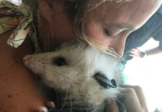 Stefani Duin of Westminster, Vermont, cuddles with an opossum on a movie set in Merry Oaks, North Carolina in 2015. Duin communicates with other fans of the animal via the Winooski-based Opossum Awareness and Advocacy group.