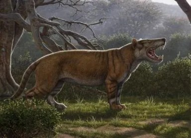 Heavier than a polar bear with teeth 'like a serrated banana,' massive lionlike fossil found in museum drawer