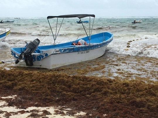 A boat is shown on the beach in Tulum, Mexico, where sargassum, a foul-smelling algae, has taken over.