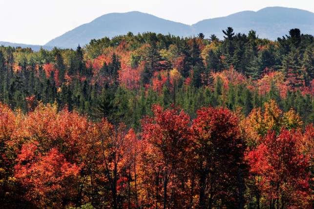 Fall foliage: Ready for leaf-peeping season?