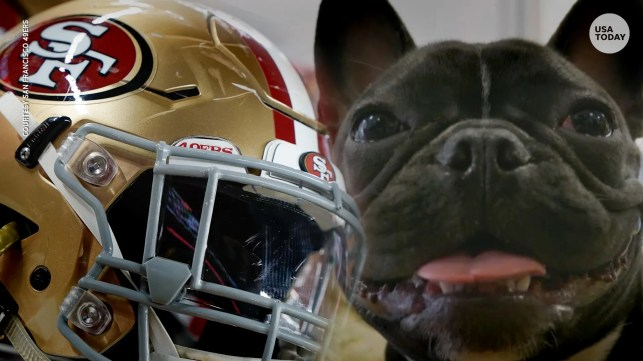 NFL may change forever thanks to Zoë, the French bulldog