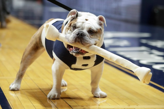 Feb. 12: Blue III, Butler's mascot, carries a bone to the floor during introductions before the game between Butler and Xavier in Indianapolis.