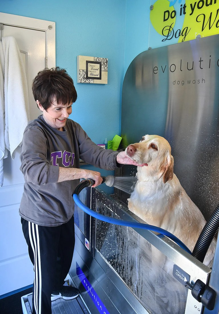 How A Dog Grooming Organization Can Benefit Your Career