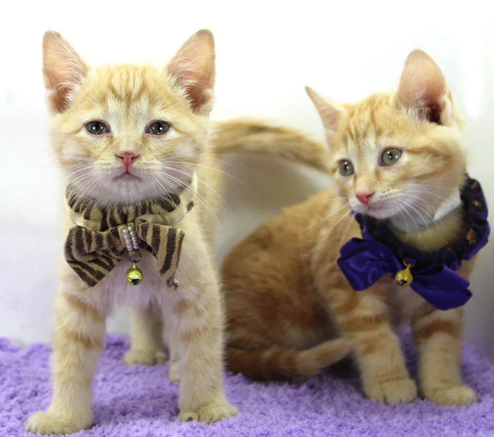 Cat Cafe Kentucky Humane Society Hold Curbside Kitchen Shower