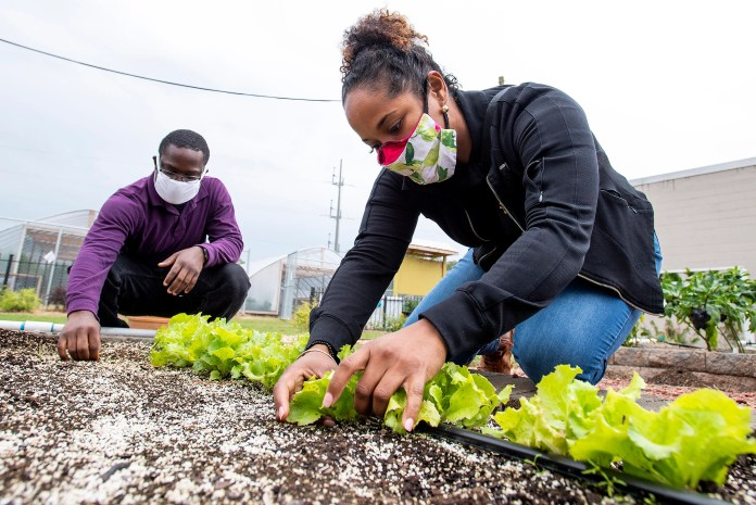 Alabama State University professor Michelle Samuel-Foo, right, and Femi Ajayi work in the Alabama State University teaching and research garden on the ASU campus in Montgomery, Ala., on Friday October 16, 2020.