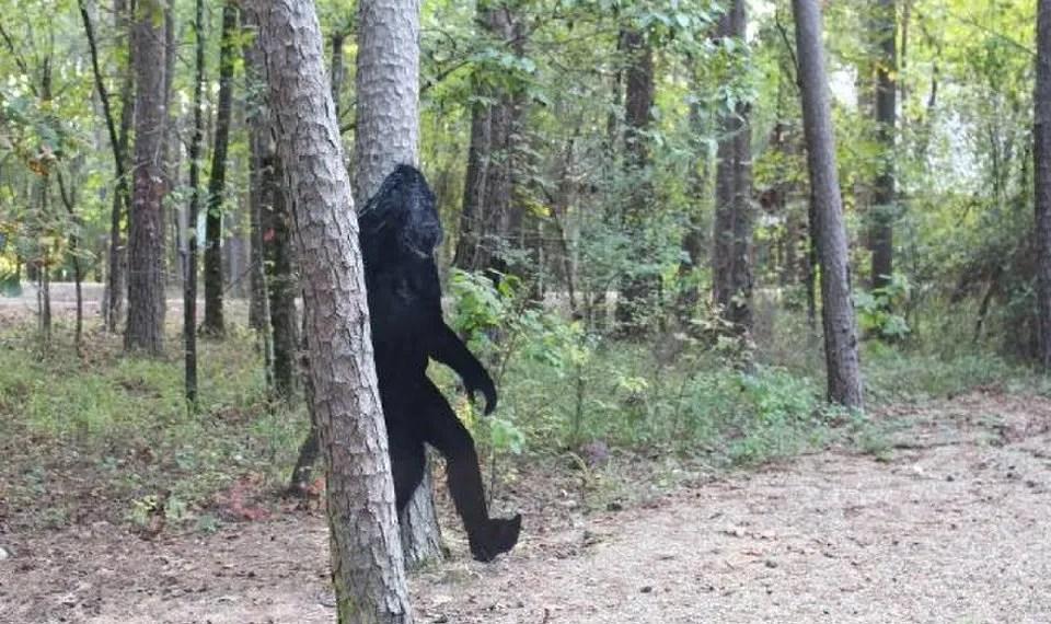 Oklahoma lawmaker files bill to create a Bigfoot hunting season