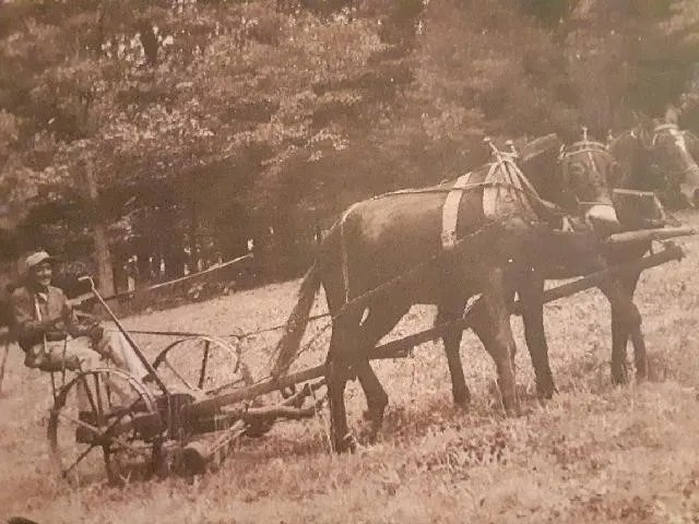 Fred Moore, Lewis Oats' grandfather, is seen here working horses on his Haywood County farm.