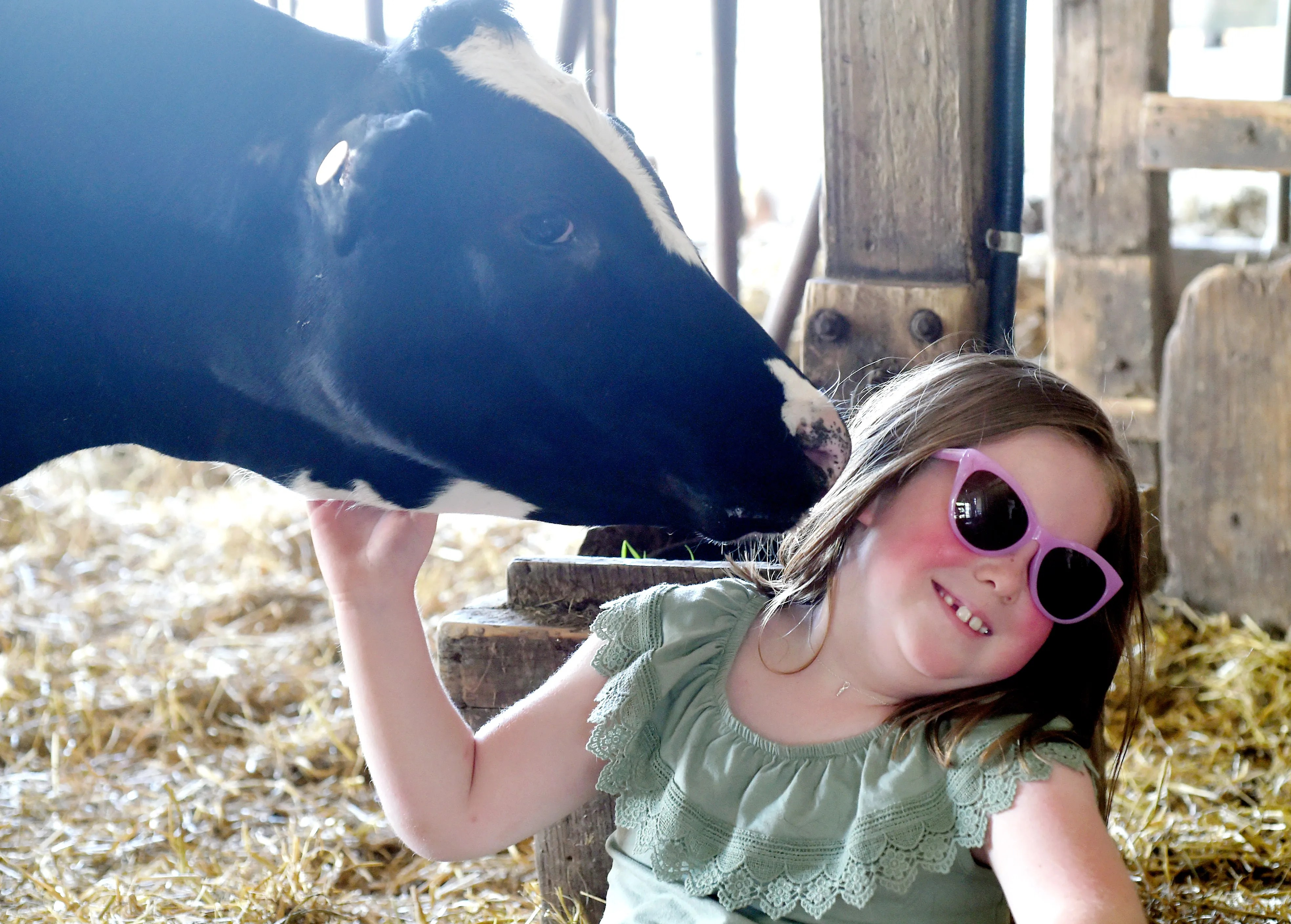 AnnaMay Stauffer, age 6, cuddles a cow at Sunset View Creamery on May 20, 2021.