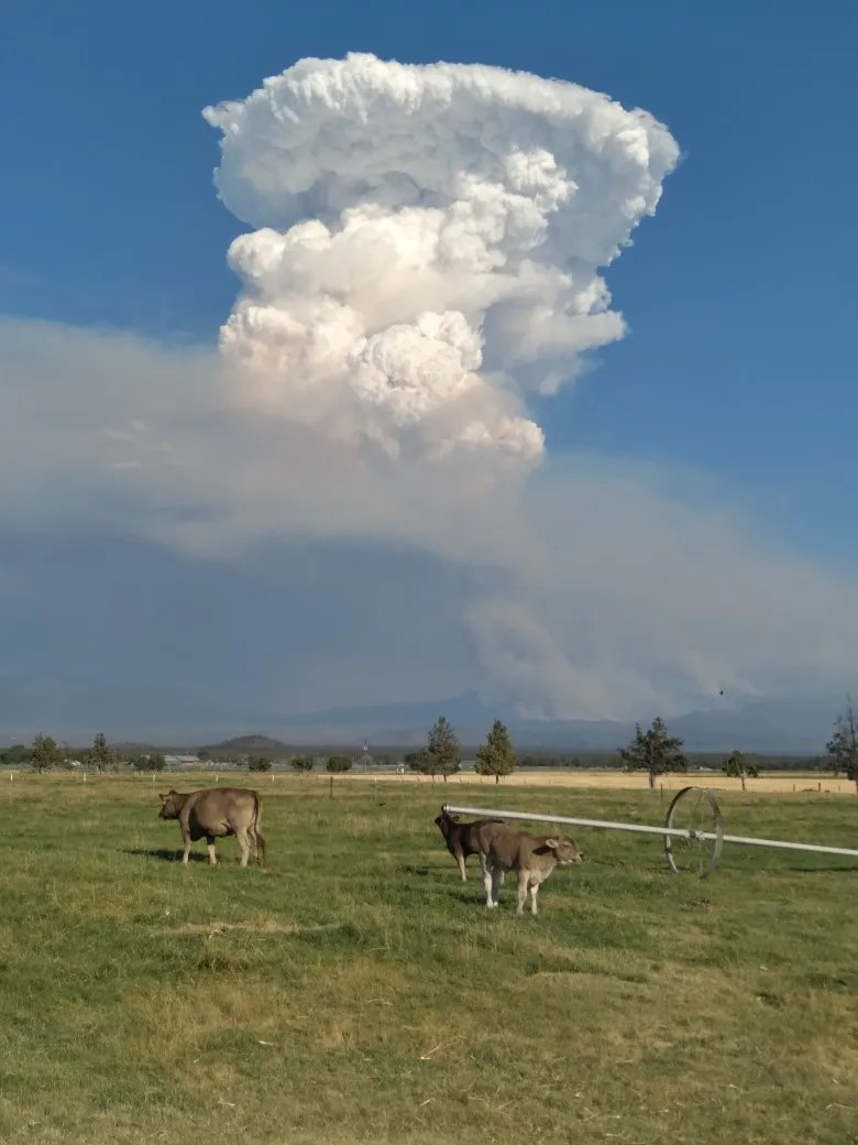 The Pyrocumulus cloud from the Lava Fire as seen from the Montague area on June 30, 2021.