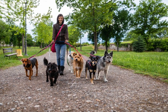 If you found new customers for your dog-walking service on Rover.com, see if you can get those customers to refer their friends to you directly.