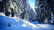 Winterwald bei Schluchsee