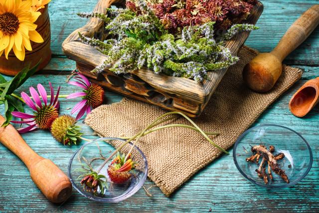Phytotherapie – Die heilende Kraft der Pflanzen