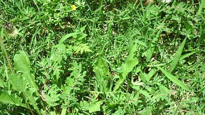 https://i2.wp.com/www.garden-counselor-lawn-care.com/images/overgrown-lawn-weeds-7.jpg