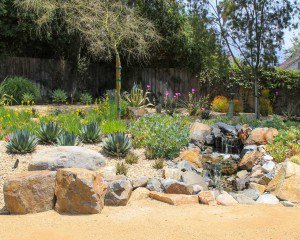 Altadena Backyard sustainable landscape with cactii and decomposed granite