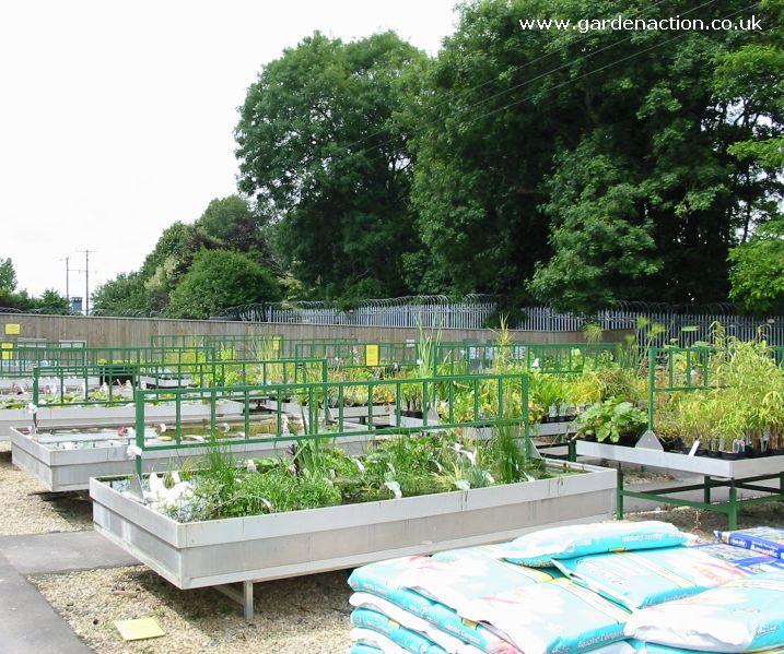 Water Garden Plants Uk