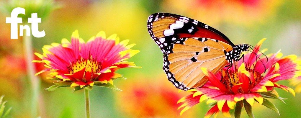 Serra delle meraviglie farfalle