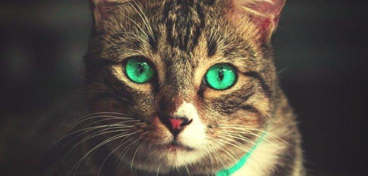 Problemi di convivenza felina