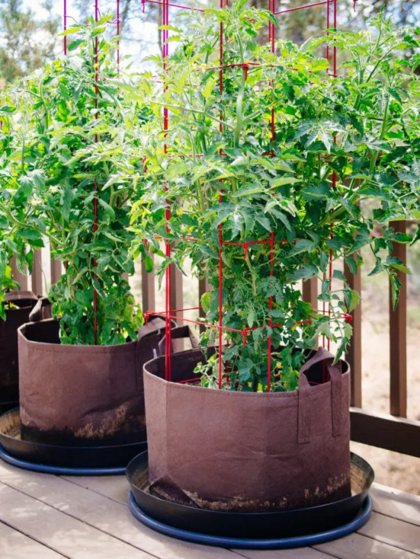 How to Grow Tomatoes in Pots — Even Without a Garden