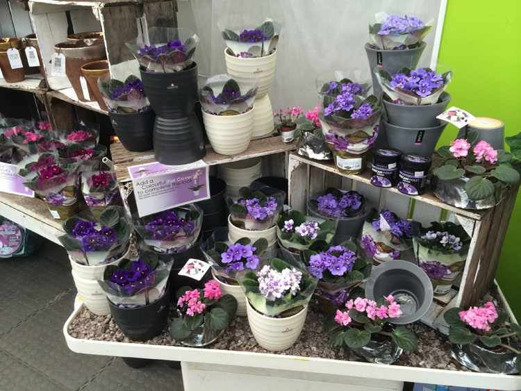 The Garden Centre Blog - Fantastic Houseplants - Ferndale Garden Centre 2