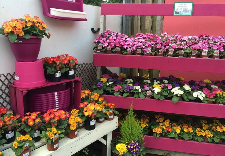 The Garden Centre Blog - Fantastic Plantaria - Ferndale Garden Centre 7